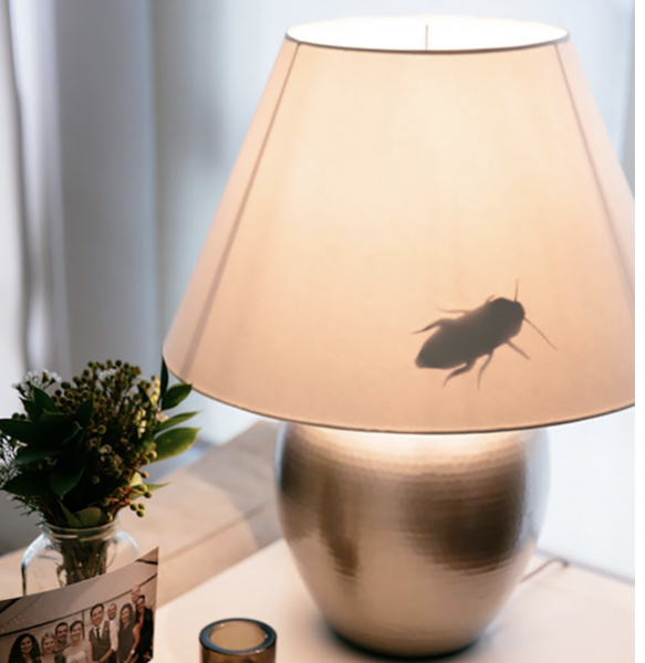 bug-in-the-lamp1